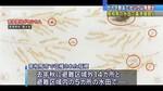 がれき撤去で水田汚染か.jpg