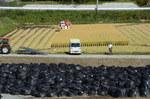 汚染土置き場の横でコメを生産.jpg